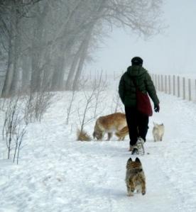 dogwalker-011